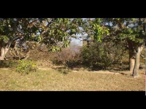 Venta de Terreno de 60 Manzanas en Oferta en Jesus de Otoro, Intibuca